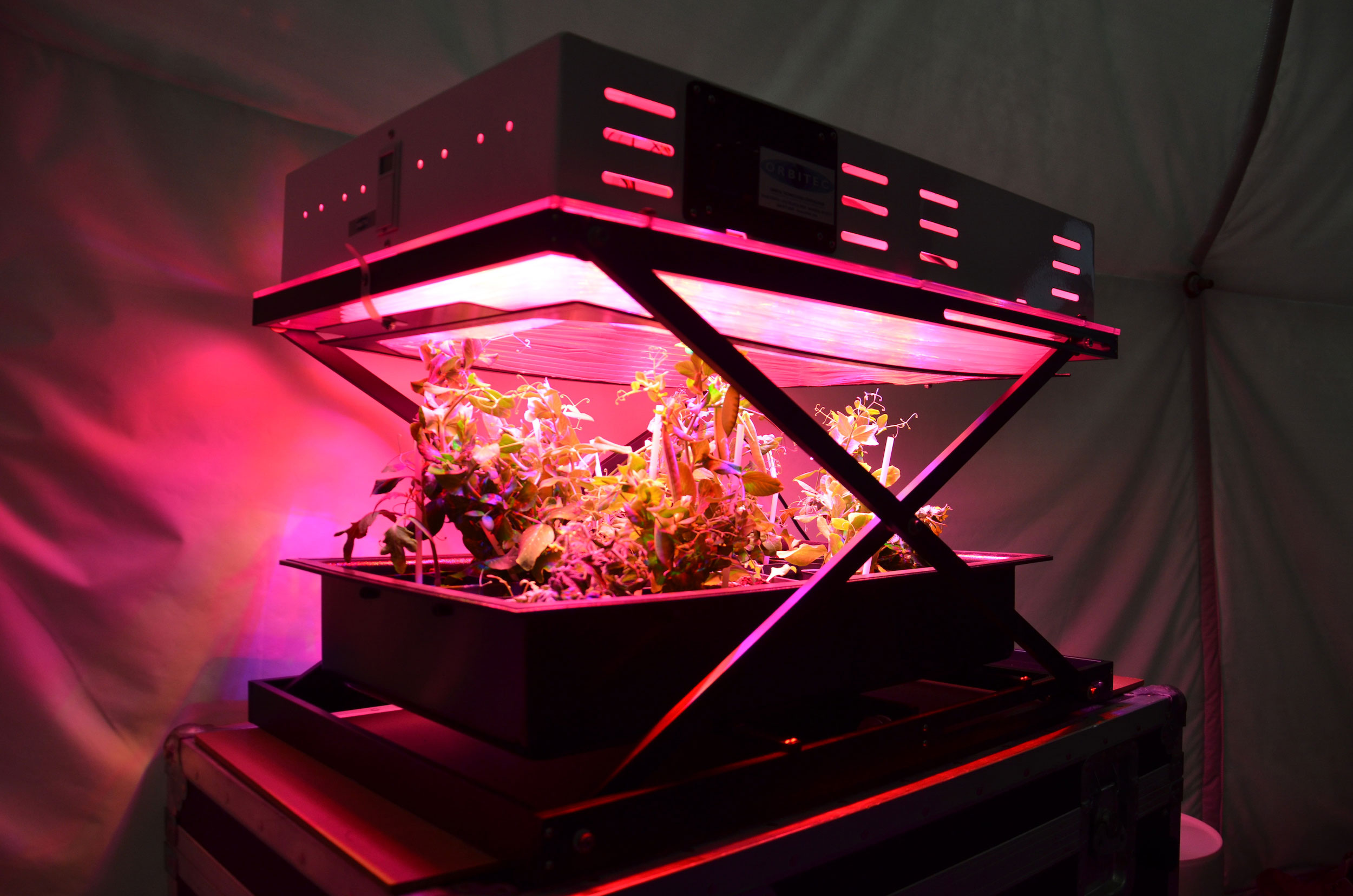 The VEGGIES prototype with a tomato crop growing within it. Credit: Ross Lockwood