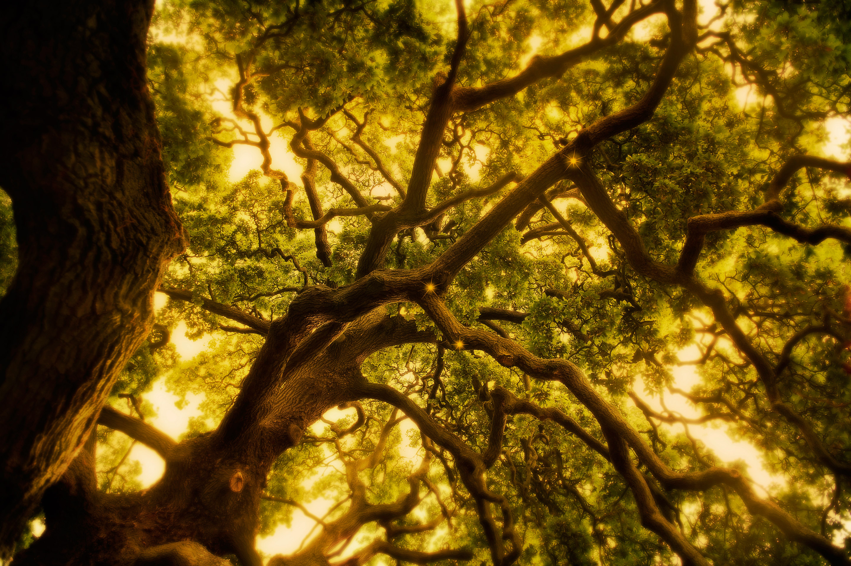 Tracing the path of natural evolution on the Tree of Life.  Image: Daniel Smith/FOX